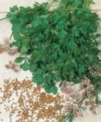 Семена кориандра/кинзы Карибе Karibe Bejo 50г