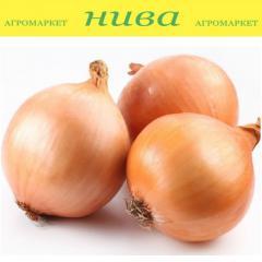 Лук Голиат Длинная Арпаж Top Onions весовая