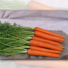 Морковь сортотип Саманта F1 Sakata 25000семян