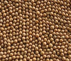 Peas yellow