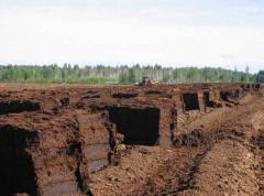 Торф низинный оптом Украина