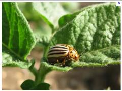 Средства защиты растений от вредителей