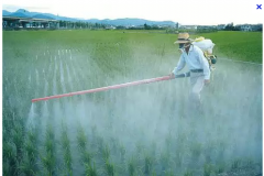 Средства защиты растений от сорняков