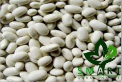 Реализуем на экспорт из Украины белую фасоль сортов