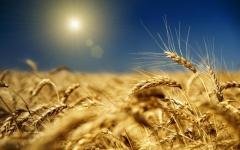Grain wastes