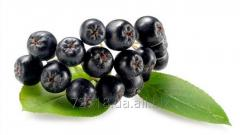 Concentrate of berries of the Black-fruited