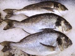 Рыба мороженая