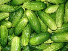 Огурцы свежие, свежие овощи, продукты питания,
