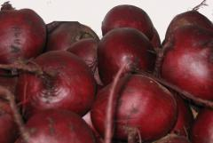 Beet Ukraine fresh wholesale