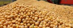 Soy without GMO