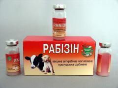 """Antirabichesky vaccine of """"Rabizin"""