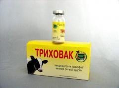 Vaccine against a trichophytia of VRH