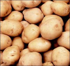 Картофель ранний, картофель посадочный, картофель