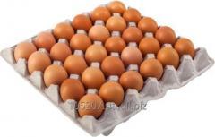 C1 brown eggs (53 - 63 gr.) for expor