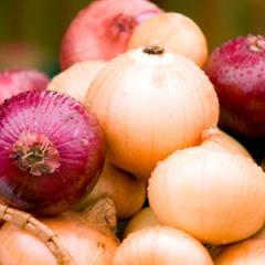 Onion winter, onion, onions fresh, onions, fresh