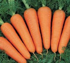 Carrots mid-season