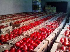 Gofrolotok under tomatoes