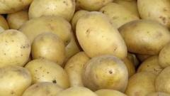Картофель ранний (земли Херсонской области)