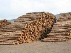 Дерево, пиломатериалы, Экспорт в страны средней