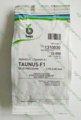 Семена свеклы Таунус TAUNUS F1 5000с