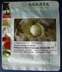 Seeds of cabbage of Nozomi this F1 1000