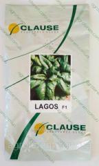 Семена шпината Лагос LAGOS 250г