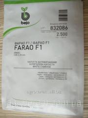 Семена капусты Фарао FARAO F1 2500с