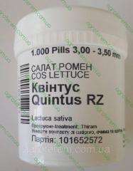 Семена салата Квинтус  QUINTUS 1000 сем. (Драже)