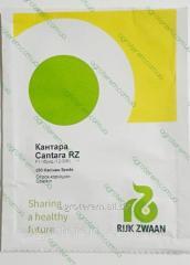 Семена огурца  Кантара KANTARA F1 250c