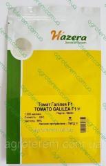 Семена томата Галилея F1 (Galilea F1) 1000 с