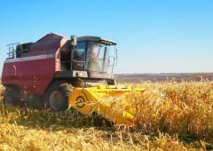 Жатка кукурузная Geringhoff (Жатка ЖК-80)