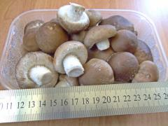 Shiitake's mushroom fresh (packed up in a