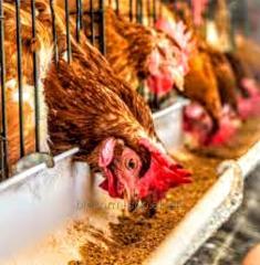 Фермерский премикс для кур и другой птицы яичных направления 3,5-2,5%