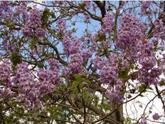 نهال  انواع درخت
