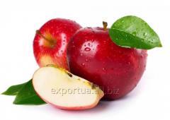 Концентрат яблочного сока в металлических...