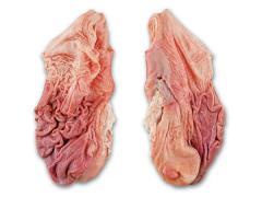 Estómagos de cerdo congelados (estómagos de cerdo