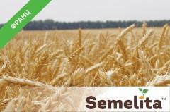 Семена пшеница озимая Франц