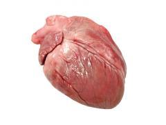 Corazón de cerdo congelada (congelada del corazón