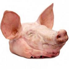 Cabeza de cerdo congelados (congelados de hocico