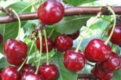 Cherry grade Perceptible