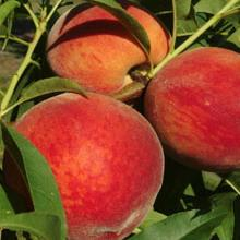 Spring's peach gold