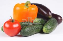 Concime organico
