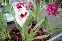 Сільське господарство, Квіти й квітництво,
