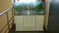 Aquariums, production of aquariums and terrariums