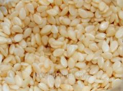 Sesame seeds crude