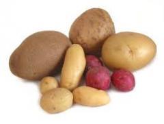 Картофель семенной, купить картофель