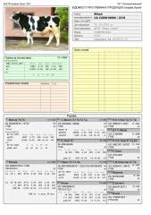 Сперма быка Финал UA 5300018694 (Голштин черно-пестрый)