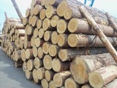 The pine sawlog (the wood round) Is possible
