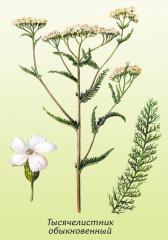 Herbage of milfoil