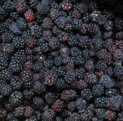 Blackberry κατεψυγμένα / IQF Blackberry